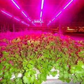 Светодиодная лента для растений